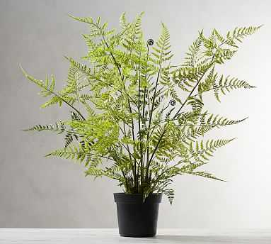 Faux Potted Tree Fern - Pottery Barn