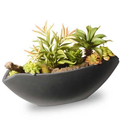 8.6 in. Succulent in Ceramic Pot, Green - Home Depot