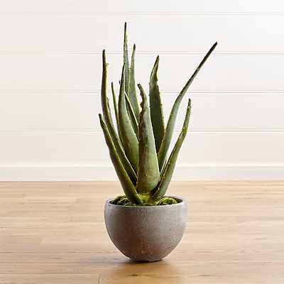 Aloe Vera Plant - Crate and Barrel