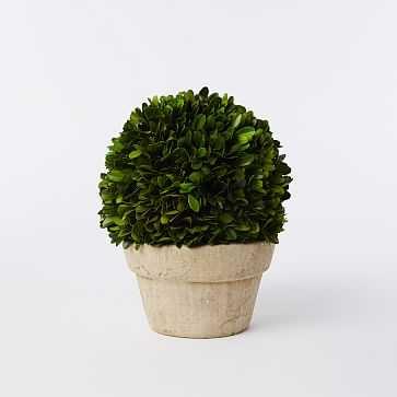 Boxwood Tree, Ball + Pot, Medium - West Elm