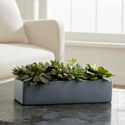 Artificial Succulents in a Pot - Crate and Barrel