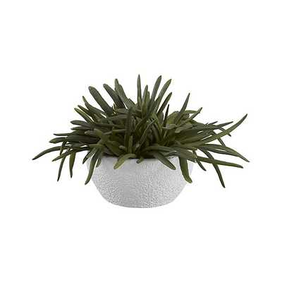 Artificial Pencil Succulent - Crate and Barrel
