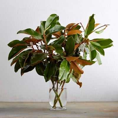 Magnolia Branches - Williams Sonoma