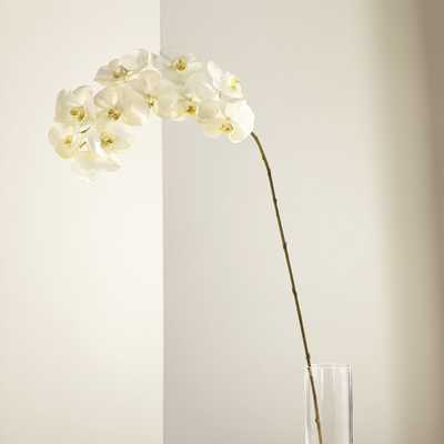 White Orchid Stem - Crate and Barrel