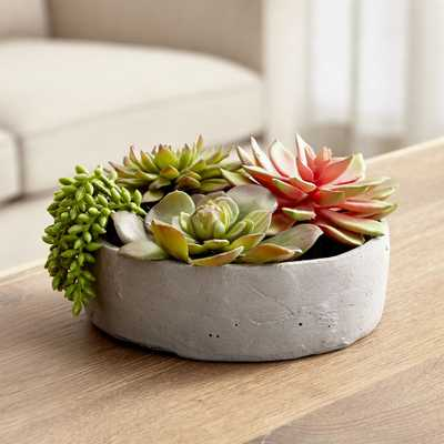 Faux Succulents in Low Round Pot - Crate and Barrel