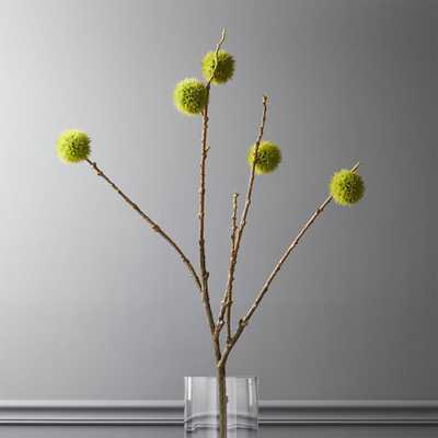 Chestnut Branch - CB2