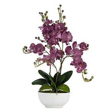 Orchid Amethyst With Pot - Z Gallerie