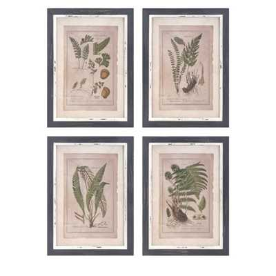 Botanical Print Wall Decor - Ast 4 - Mercer Collection
