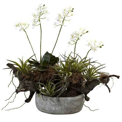 Orchid and Succulent Garden with Driftwood and Decorative Vase, Whites - Home Depot