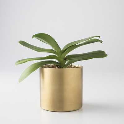 Brass Planter - Schoolhouse Electric