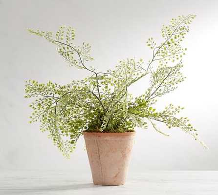Faux Potted Maiden Hair Fern - Pottery Barn