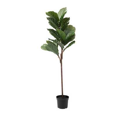 FEJKA  Artificial potted plant, indoor/outdoor fiddle-leaf fig - Ikea