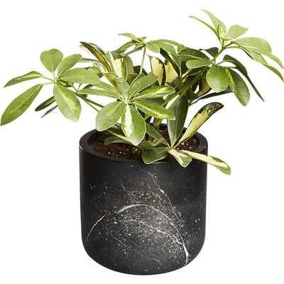 black marble planter - CB2