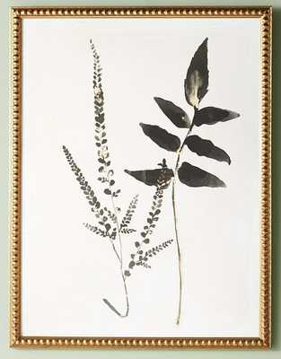 Upright Fern Wall Art - Anthropologie