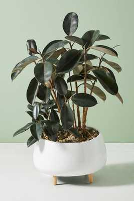 Oversized Ceramic Planter - Anthropologie