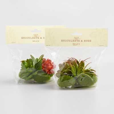 6 Piece Faux Succulent and Moss Assortment Set of 2 Packs: Green by World Market - World Market/Cost Plus