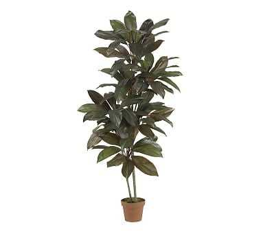 Faux Potted Cordyline Plant - Pottery Barn