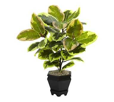 Faux Potted Variegated Rubber Leaf Plant, Wood Planter - Pottery Barn