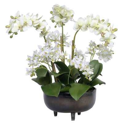 Diane James Home Phalaenopsis Orchids Floral Arrangement in Planter - Perigold