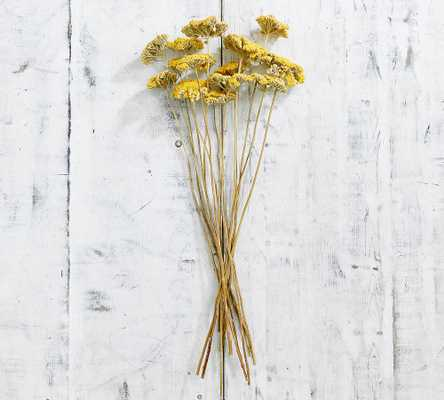 Dried Yarrow Bundle, Yellow - Pottery Barn