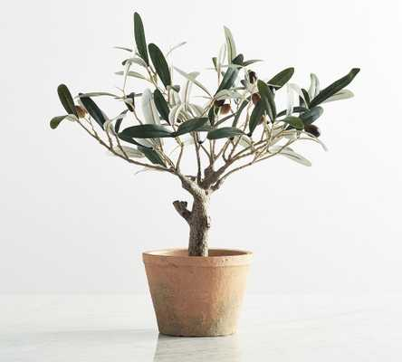 Faux Potted Olive Tree, Mini - Pottery Barn