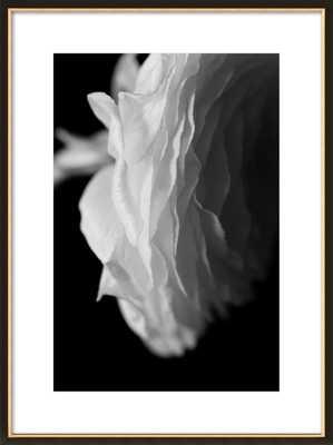 White Ranunculus by Emilia Jane Schobeiri for Artfully Walls - Artfully Walls