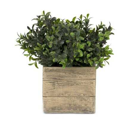 Life-Like Boxwood Plant in Planter - Wayfair