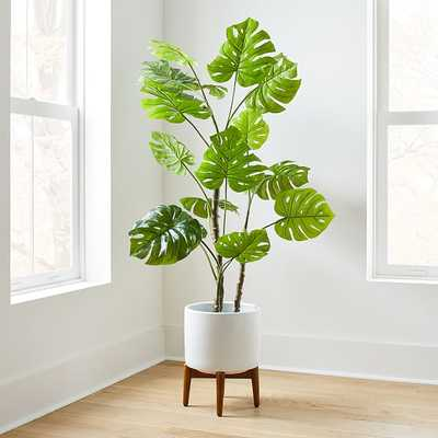 Potted Monstera 5' Plant & Turned Wood Planter, Wide, White - West Elm