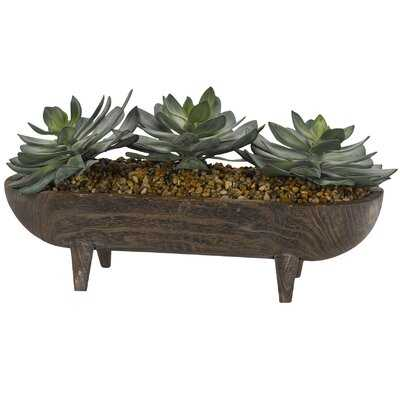 Echeveria Succulent in Wooden Dough Bowl with Legs - Wayfair