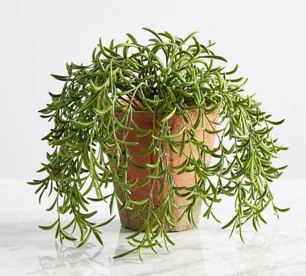 Faux Potted String of Fishhooks Plant, Medium - Pottery Barn