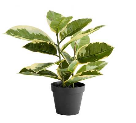 Faux Potted Houseplant, Rubber Tree - Pottery Barn