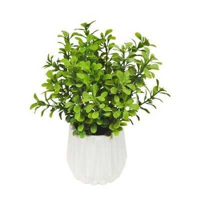 6'' Artificial Boxwood Plant in Decorative Vase - Wayfair
