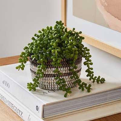 Faux Trailing Succulent & Colorblock Basket Planter Set - West Elm