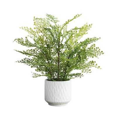 15'' Artificial Fern Plant in Pot - Wayfair