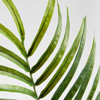 Phoenix Palm Stem - Crate and Barrel