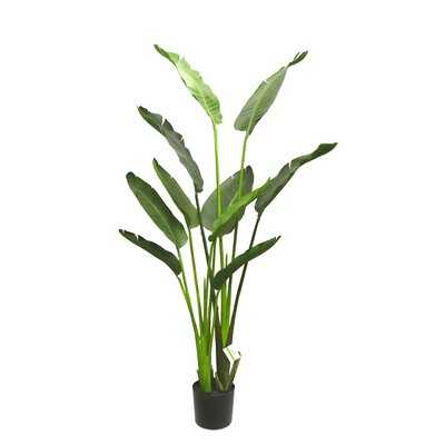 Travelers Palm Plant in Pot - Wayfair