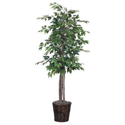 Artificial Potted Natural Ficus Tree in Basket - Wayfair
