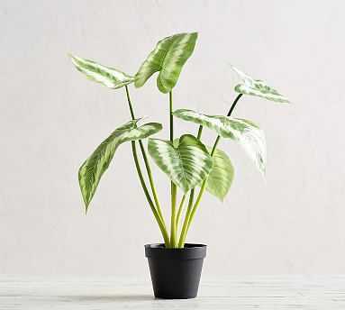 Faux Striped Leaf Houseplant, Medium - Pottery Barn