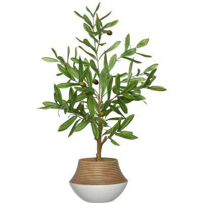 Artificial Olive Tree Tree in Planter - Wayfair