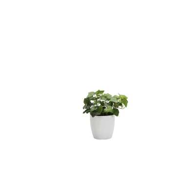 "Thorsen's Greenhouse 7"" Live Ivy Plant in Pot Base Color: White - Perigold"