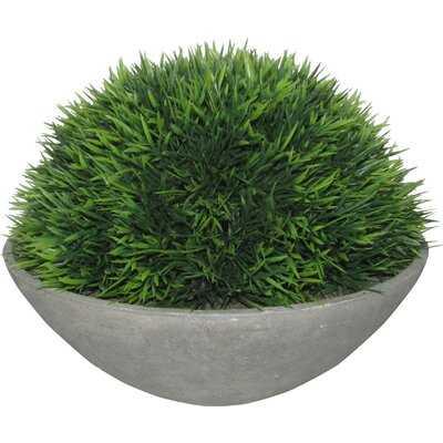 Cedar Topiary in Pot - Wayfair
