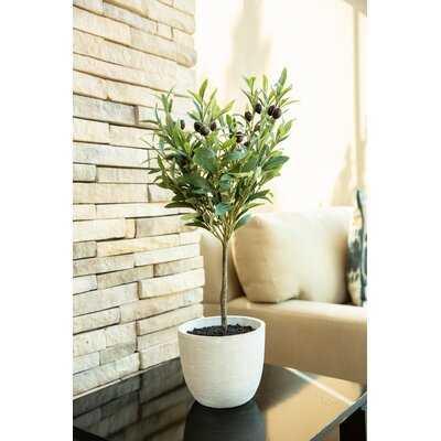 Olive Tree in Pot - Birch Lane