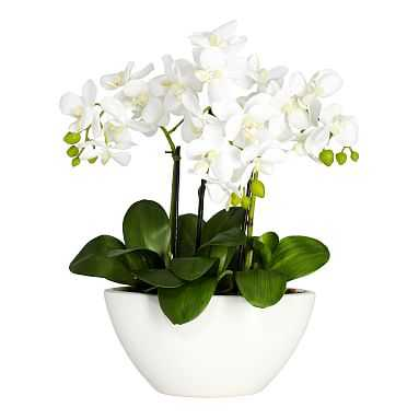 Faux Potted Orchid Arrangement - Pottery Barn Teen
