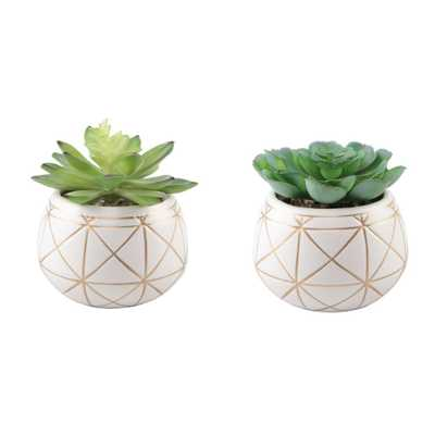 FLORA BUNDA Set of 2 Succulent in 4 in. GEO Gold Round Ceramic Planter - Home Depot
