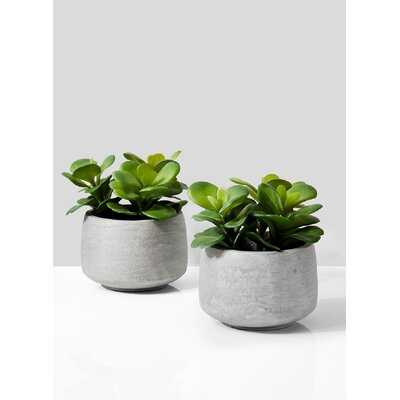 Evergreen Succulent Pot Set (Set of 2) - Wayfair