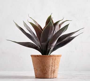 Faux Potted Agave, Red, Medium - Pottery Barn
