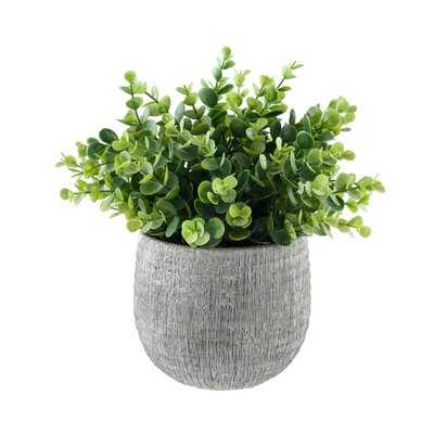 5.75'' Artificial Eucalyptus Plant in Pot - Wayfair