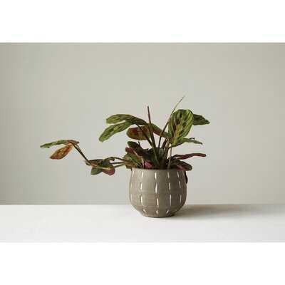 Boan Glazed Terracotta Pot Planter - Birch Lane