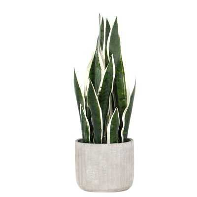 Artificial Snake Plant in Pot - Wayfair
