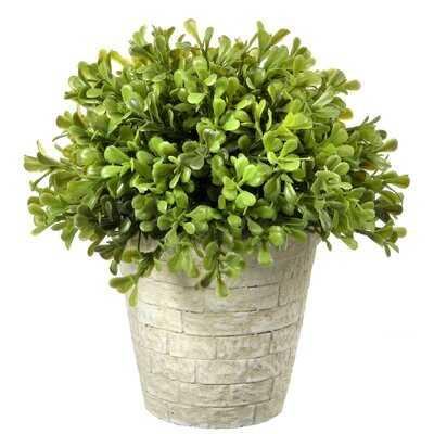 Regency Spring Boxwood Topiary in Pot - Wayfair